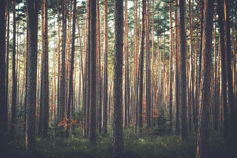 trees-1209088_960_720